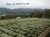 14-11-09&13銅鑼賞杭菊:DSC_3788.jpg