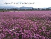 15-11-09新社花海:DSC_6597.jpg