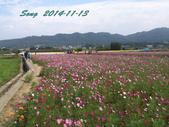 14-11-09&13銅鑼賞杭菊:DSC_3919.jpg