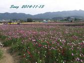 14-11-09&13銅鑼賞杭菊:DSC_3920.jpg
