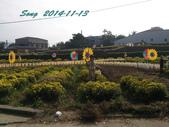 14-11-09&13銅鑼賞杭菊:DSC_3933.jpg