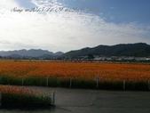 15-11-09新社花海:DSC_6603.jpg