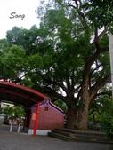 13-04-24后里月眉糖廠、外埔永豐桐花步道、公婆樹:公婆樹&土地公土地婆廟