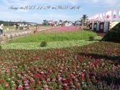 15-11-09新社花海:DSC_6605.jpg