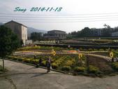 14-11-09&13銅鑼賞杭菊:DSC_3935.jpg