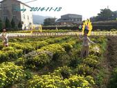 14-11-09&13銅鑼賞杭菊:DSC_3931.jpg