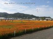 15-11-09新社花海:DSC_6638.jpg