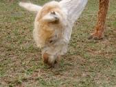 13-04-15天馬牧場:DSCF0024.jpg