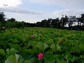 13-06-10大甲苗圃&葵海農場賞蓮:大甲苗圃