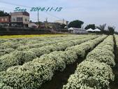 14-11-09&13銅鑼賞杭菊:DSC_3913.jpg