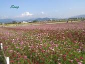 14-11-10新社花海:DSC_3895.jpg