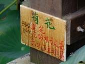 12-06-11 大甲賞蓮part2、向日葵小花田、建興海邊:葵海農場