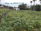 14-11-09&13銅鑼賞杭菊:DSC_3741.jpg