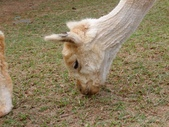 13-04-15天馬牧場:DSCF0025.jpg