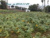 14-11-09&13銅鑼賞杭菊:DSC_3739.jpg