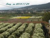 14-11-09&13銅鑼賞杭菊:DSC_3748.jpg