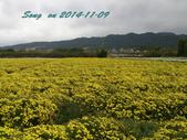 14-11-09&13銅鑼賞杭菊:DSC_3754.jpg
