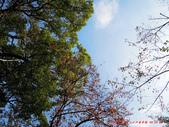 20141030-1103日本東京自由行-4:20141030-1103日本東京自由行0670.jpg