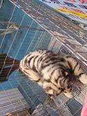 2008.07.27 台中寵物嘉年華:IMG_2010