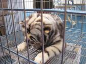 2008.07.27 台中寵物嘉年華:IMG_2011