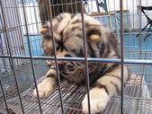 2008.07.27 台中寵物嘉年華:IMG_2012