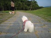 2008.10.25 桃園河岸森林:IMG_3198