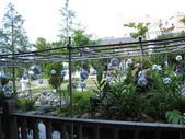 2009.06.03 紙箱王國 (東東芋圓):IMG_5238.JPG