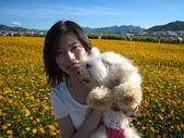 2008.11.15 新社花海:IMG_3279