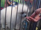 2008.07.27 台中寵物嘉年華:IMG_2017