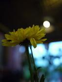2011.04.08 in柬埔寨-吳哥窟:02-006-吳哥窟-guest  house-sam拍攝.JPG