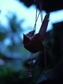 2011.04.08 in柬埔寨-吳哥窟:02-009-吳哥窟-guest  house-sam拍攝.JPG