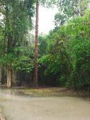 2011.04.09 in柬埔寨-吳哥窟:01-001-吳哥窟-塔普倫寺.JPG