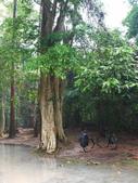 2011.04.09 in柬埔寨-吳哥窟:01-002-吳哥窟-塔普倫寺.JPG