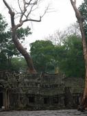 2011.04.09 in柬埔寨-吳哥窟:01-004-吳哥窟-塔普倫寺.JPG