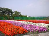 2012.04.04-3 中社觀光花市:P1150630.jpg