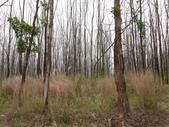 2011.04.04 柬埔寨-西哈努克:03-007-西哈努克隨拍.JPG