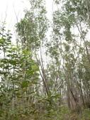 2011.04.04 柬埔寨-西哈努克:03-008-西哈努克隨拍.JPG