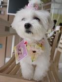 2010.08.29 寵物美容講座in貝堡郡:P1040549.JPG