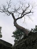 2011.04.09 in柬埔寨-吳哥窟:01-010-吳哥窟-塔普倫寺.JPG