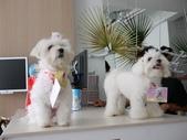 2010.08.29 寵物美容講座in貝堡郡:P1040551.JPG