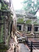 2011.04.09 in柬埔寨-吳哥窟:01-011-吳哥窟-塔普倫寺-像被蛇纏繞的榕樹.JPG