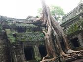 2011.04.09 in柬埔寨-吳哥窟:01-012-吳哥窟-塔普倫寺-像被蛇纏繞的榕樹.JPG