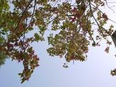 2010.03.23 鯉魚潭vs心之芳庭:P1000777-1.jpg
