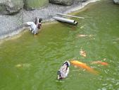 2008.05.24 宜蘭葫堤園:IMG_1333.jpg