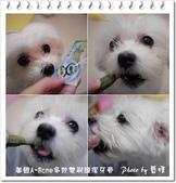 2010.12.27美國A-Bone多效雙刷頭潔牙骨:A-Bone02.jpg