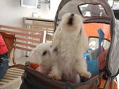 2010.08.29 寵物美容講座in貝堡郡:P1040554.JPG