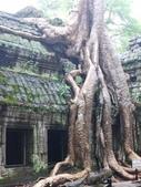 2011.04.09 in柬埔寨-吳哥窟:01-014-吳哥窟-塔普倫寺-像被蛇纏繞的榕樹.JPG