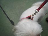 2008.07.27 台中寵物嘉年華:IMG_2000