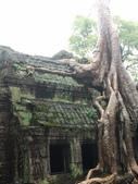 2011.04.09 in柬埔寨-吳哥窟:01-015-吳哥窟-塔普倫寺-像被蛇纏繞的榕樹.JPG
