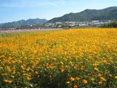 2008.11.15 新社花海:IMG_3266